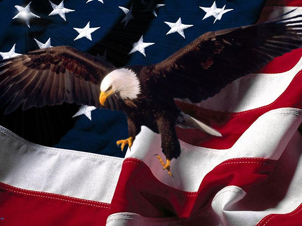 July 4, bald eagle with US Flag, Independence Day